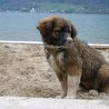 Meine Lieblingsbeschäftigung - im Sand sulen