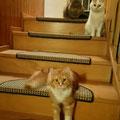 die drei Muske(katzen)tiere