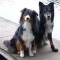 Timea und Duke im Waldviertel