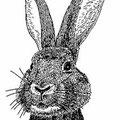 セーターウサギ