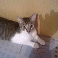 Roshi