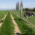 Ausflug zur Straußenfarm