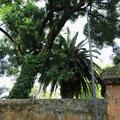 Palmgarten in Pisa, 2013