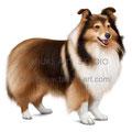 シェルティのイラスト 人気ペット犬のリアルイラストです。無断使用禁止