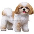 シーズーのイラスト 人気ペット犬のリアルイラストです。無断使用禁止