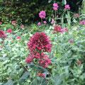du jardin de La Villa Victoria Auvergne