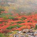 10月上旬・ナナカマドの紅葉・位ヶ原