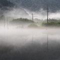 6月下旬・朝もやの大正池