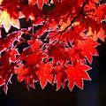 10月下旬・紅葉に着いた霜・一ノ瀬