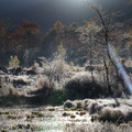 11月上旬・光る霜・一ノ瀬まいめ池