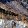 1月下旬・白骨へのスーパー林道にて