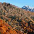 10月下旬・紅葉の山・安房峠