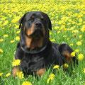 Max | D-Kronach