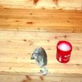 15.10.2017 - Es geht halt nix über Üütärsalbi. Leute, belässt das Holz unbehandelt und gönnt ihm ab und zu etwas Eutra.