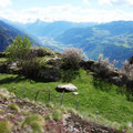18.04.2014 - Ein Kraftort? Vom etwas versteckten biä-neetär führt ein kleiner Weg hierher, die Zivilisation unten im Tal zeigt sich volle Breitseite, man kann sie auch hören, innert 50 m bist du jedoch wieder weit weg.