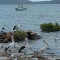 Aan de Nelson Bay