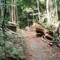 Grampions Nationaal park : Alleen het pad vrijmaken en de natuur doet de rest.