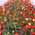 ein Blumenmehr in einem der vielen Parks