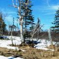Leider unscharf, aber noch ´ne Menge Schnee in 445 m Höhe