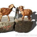Die Schafe der Bergische-Baeuerin