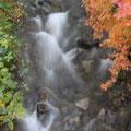 当館裏手を流れる「天竜川」と紅葉