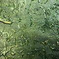 grüne Manufaktutapete