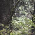 Waldinneres © Swanti Bräsecke-Bartsch