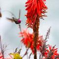 Tiere und Pflanzenfotografie