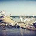 Pelicanos Blancos en Laguna de Chapala