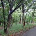 都立林試の森公園①