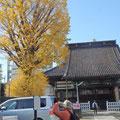 法禅寺のイチョウ