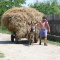 ...viele Menschen versuchen sich mit der Landwirtschadt teilweise selbst zu versorgen...