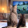 Katzen würden Hundefreilauf gucken....