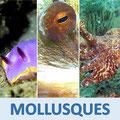 Vidéos mollusques