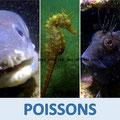 Vidéos poissons