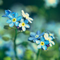 <b>Forget Me Not (299/365)</b>