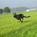 Odin, mein bisher einziger Hund welcher im Welpenalter zu mir kam