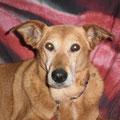 Cita kam mit fast 12 Jahren zu uns und wir durften ihr noch 3.5 wunderschöne Jahre schenken