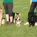 Joschi,Kiwi & Peggy