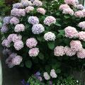 竹下様 『紫陽花』 福岡県