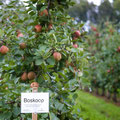 Selbst zu pflücken sind die Apfelsorten Holsteiner Cox, Cox Orange, Elstar, Jonagold, Roter Boskoop, Topaz und Rubinette sowie die Birnensorten Conference, Bürgermeister und Alexander Lucas