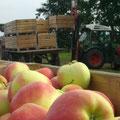 Verladen der Apfelkisten