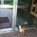 Kochi Uni's pet cat always at the entrance, この猫はこの場所で大体寝ています (Jun. 2013)