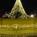 2017.12.18 付属病院前のツリー Christmas tree