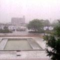 Kochi Uni in rainy season, 大学にて梅雨の時期での一枚 (May, 2013)