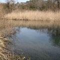 2010年3月22日、忍野堰堤上流