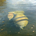 Manatee Springs SP