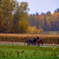 Amishland
