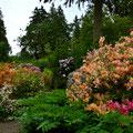 Rhododendron Garten, Vancouver