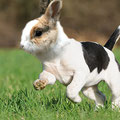 """Dog/Rabbit"" - AberdeenS"
